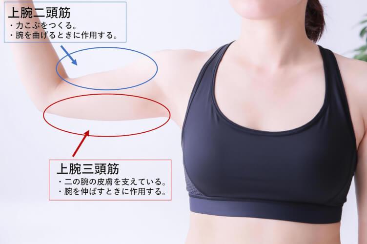 痩せ ない 二の腕